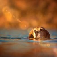 Wasserbeagle.jpg